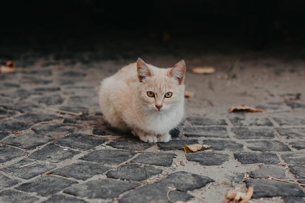 Beżowy kot na zewnątrz