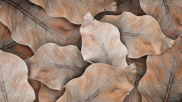 Beżowy wzór suszonych liści i tapeta