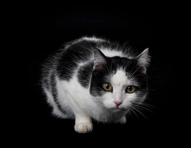 Bezpański kot przed czarnym tłem