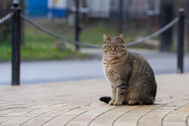 Bezpański kot siedzi na chodniku na miejskiej ulicy.