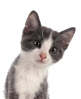 Bezpański kotek na białym tle