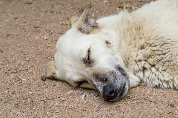 Bezpański pies śpi na ziemi w parku