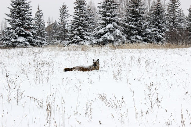 Bezpański pies w śniegu