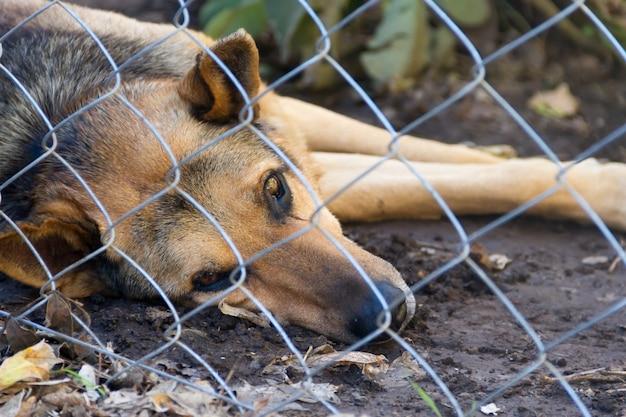 Bezpański pies zamknięty ofiarą przemocy