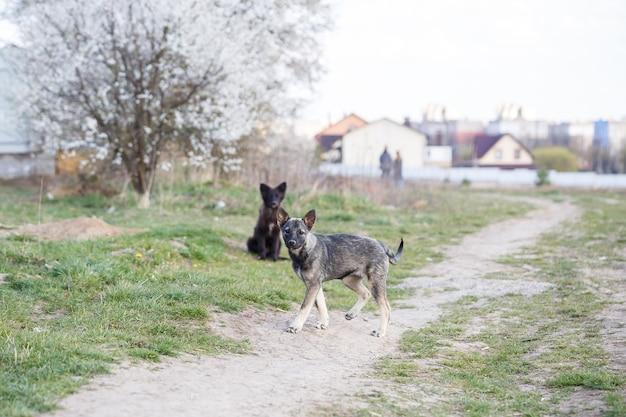 Bezpańskie małe psy na ulicy, chroniące zwierzęta i przyrodę