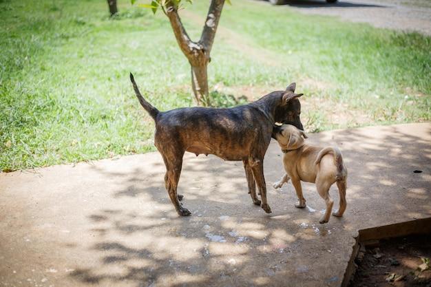 Bezpańskie psy bawiące się z nimi synem. opuszczone bezdomne bezpańskie psy leżą na ulicy.
