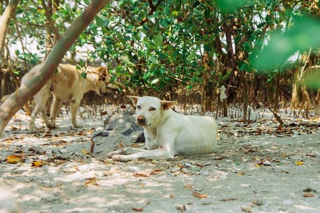 Bezpańskie psy chowają się w lesie.