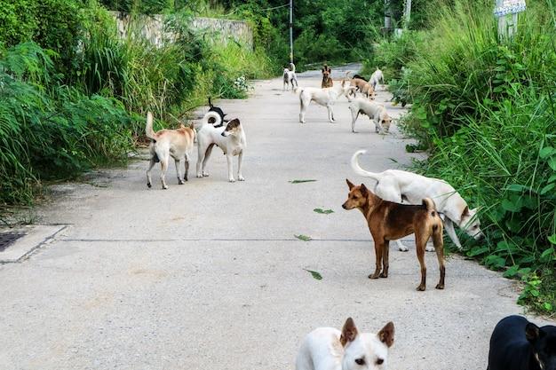 Bezpańskie psy czekają na jedzenie od ludzi, którzy przeszli przez pustynię