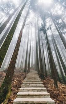 Bezpośrednie światło słoneczne przez drzewa z mgłą w lesie z kamiennymi schodami w alishan.