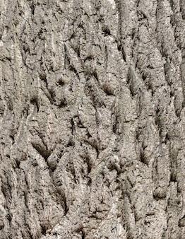 Bezszwowa powierzchnia kory drzewa.