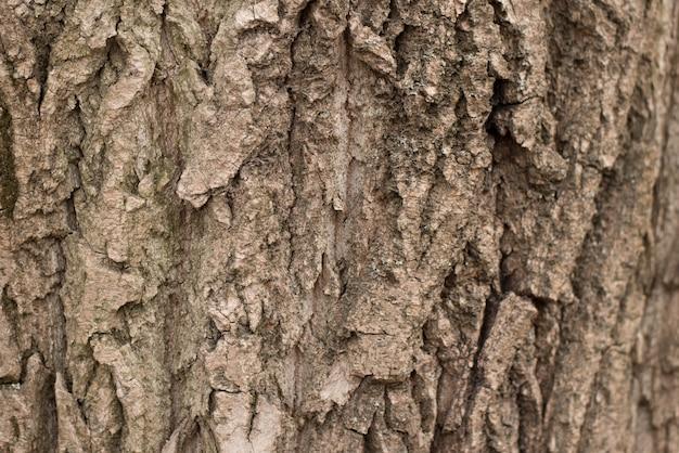 Bezszwowe tło kory drzewa. brown tileable tekstura stary drzewo.