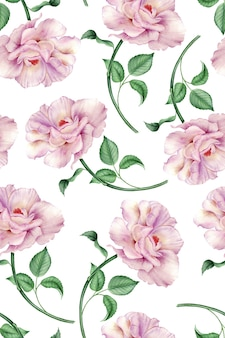 Bezszwowy wzór z menchii różą na białej tło akwareli botanicznej ilustraci