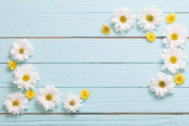 Biała chryzantema i żółty podbiałek na błękitnym drewnianym tle