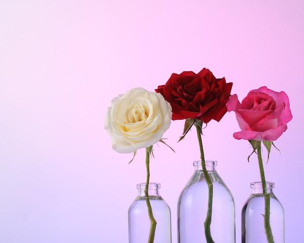 Biała, czerwona i różowa róża w szklanych butelkach na różowym tle