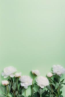 Biała elegancka piwonia na zielonym tle