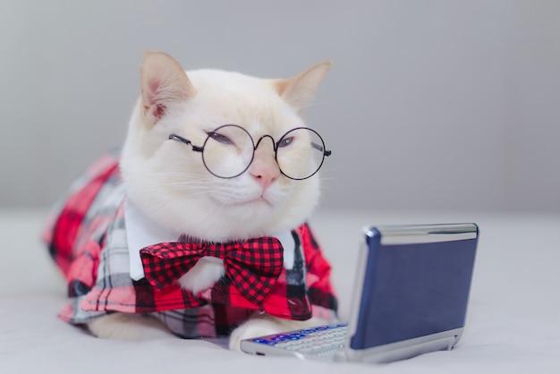 Biała figlarka siedzi na łóżku patrzeje pastylkę. kot szuka wideo w internecie