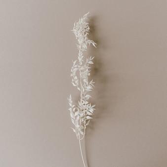 Biała gałąź rośliny na neutralnej, pastelowo beżowej powierzchni