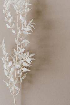 Biała gałąź rośliny na neutralnym pastelowym beżowym tle
