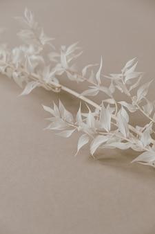 Biała gałązka rośliny na neutralnym pastelowym beżu. widok z góry