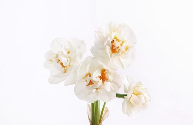 Biała głowa kwiat na białym tle