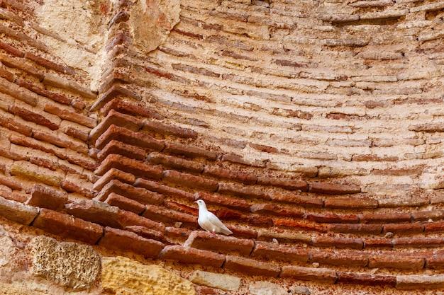 Biała gołębica na ołtarzu kościoła
