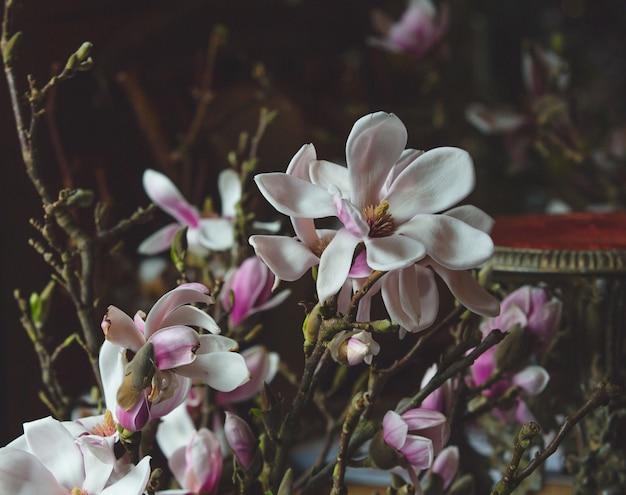 Biała i purpurowa orchidea kwiatów gałąź.