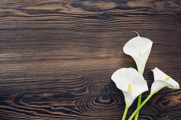 Biała kalia kwitnie na drewnie, odgórny widok. puste miejsce na tekst