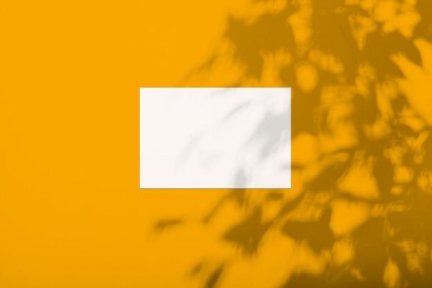 Biała kartka na kolorowej ścianie z cieniem z drzewa