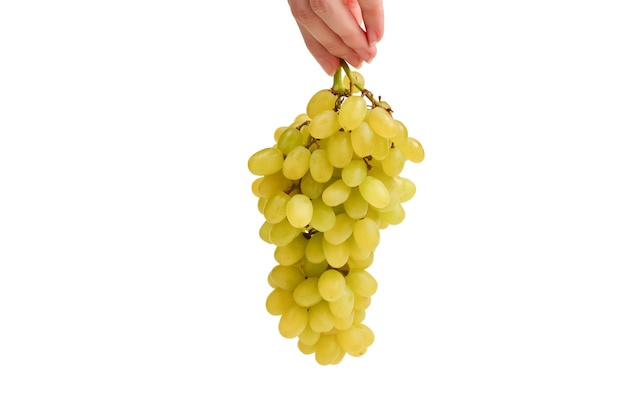 Biała kiść winogron w rękach na białym tle