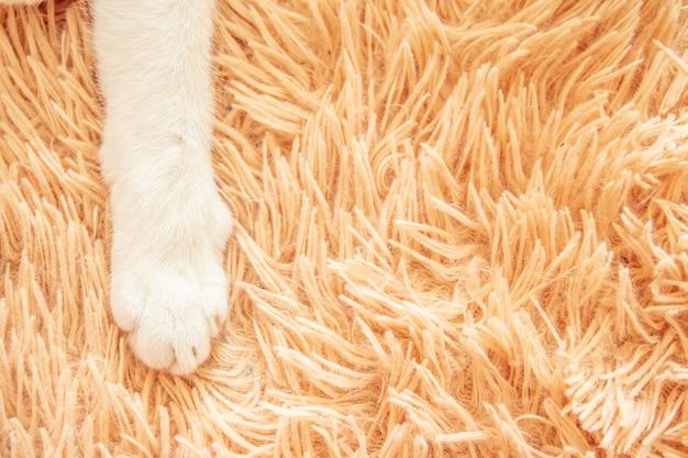 Biała kot łapa w łóżkowym miękkim czuciowym wakacyjnym pomysłu tle