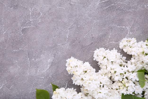 Biała lila kwiat gałąź na szarym tło betonie z copyspace