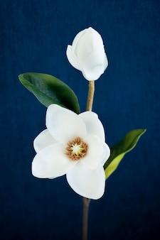 Biała magnolia na niebieskim tle
