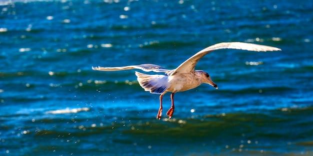 Biała mewa latająca na niebie nad morzem, na letnie wakacje nad morzem