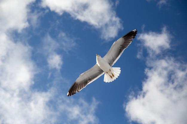 Biała mewa latająca po błękitnym niebie