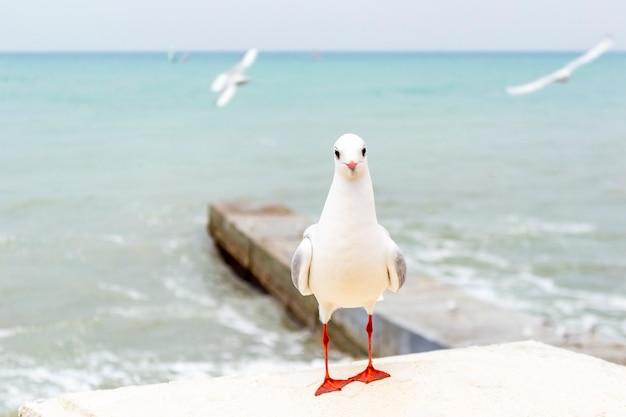 Biała mewa patrząc w kamerę po przeciwnej stronie morza
