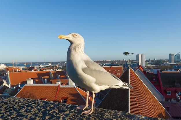 Biała mewa stoi na dachu