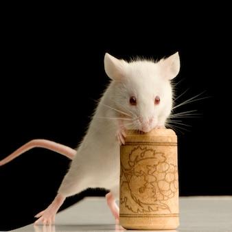 Biała mysz na białym tle