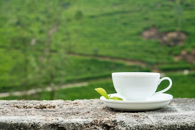 Biała napój filiżanka odizolowywająca na plantaci tle