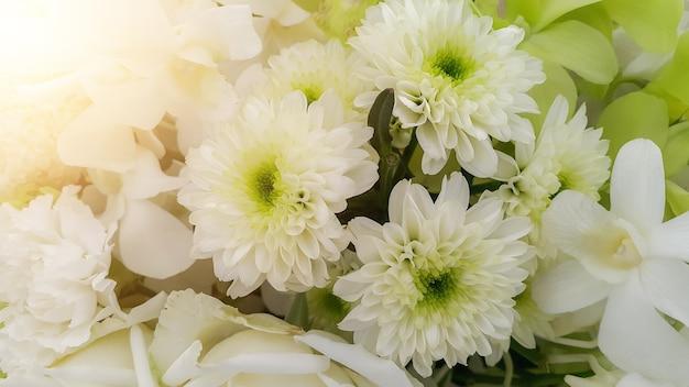 Biała natura kwitnie tło