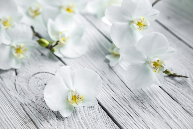 Biała orchidea na drewnianym tle