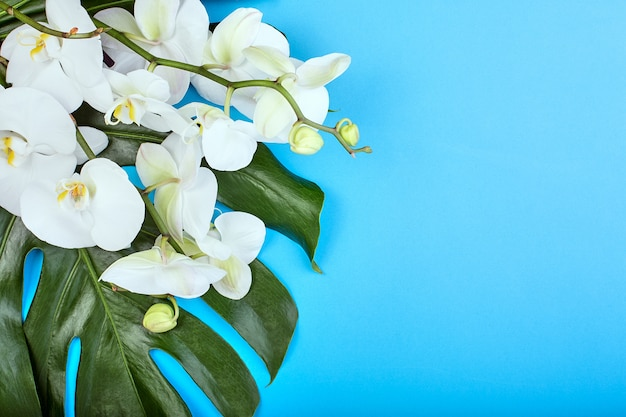 Biała orchidea na niebieskim tle kwiatowe backgroundtropical białe orchidee na niebieskim tle. skopiuj miejsce