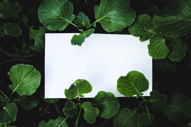 Biała papierowa karta na zielonej rośliny tle, reklamy pojęcie.