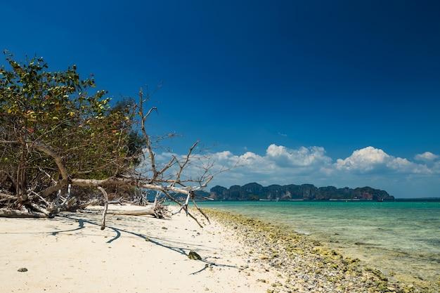 Biała piaszczysta plaża i martwe tropikalne drzewo przeciw błękitne niebo i turkusowe morze na wyspie koh poda, krabi, tajlandia.