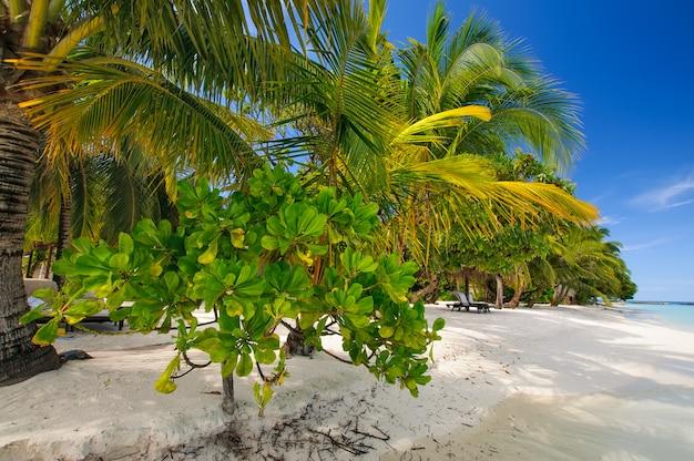 Biała piaszczysta plaża z palmami i zielonymi roślinami