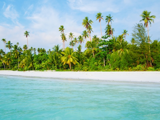Biała, piaszczysta plaża z palmami kokosowymi turkusowa przezroczysta woda, tropikalny cel podróży, pustynna plaża bez ludzi - kei islands, moluccas, indonezja