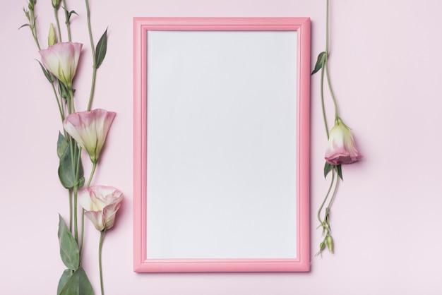 Biała rama z eustoma kwiatami na różowym tle