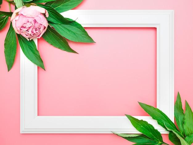 Biała ramka i różowe piwonie na różowym tle, widok z góry, miejsce na kopię, leżał na płasko, makieta.
