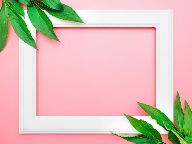 Biała ramka i różowe piwonie na różowym tle