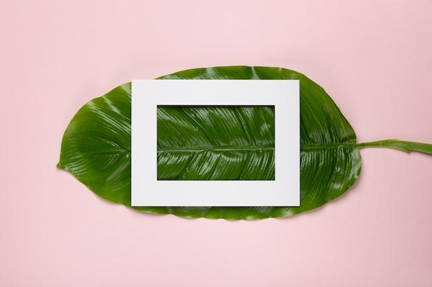 Biała ramka na zielonym liściu