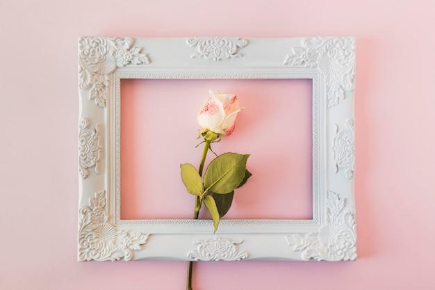 Biała rocznika fotografii rama i świeży kwiat